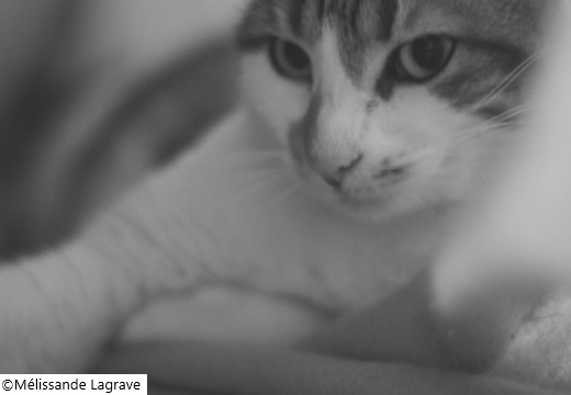 Photographie de chat